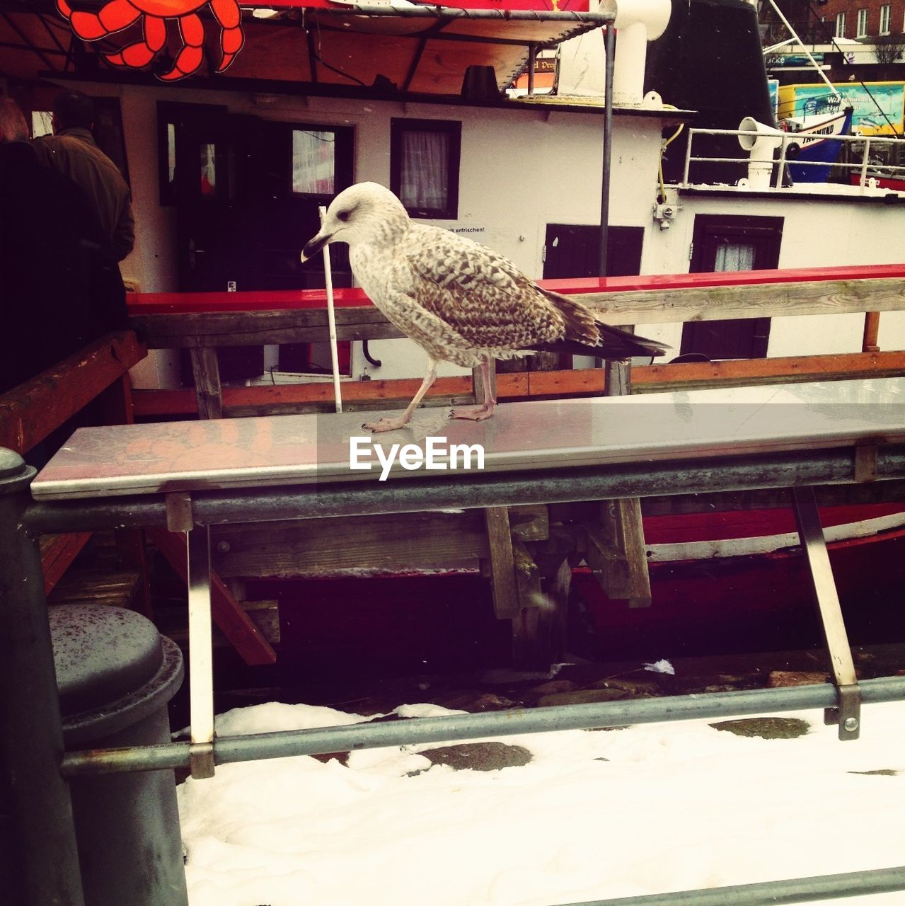 Seagull standing on nautical vessel