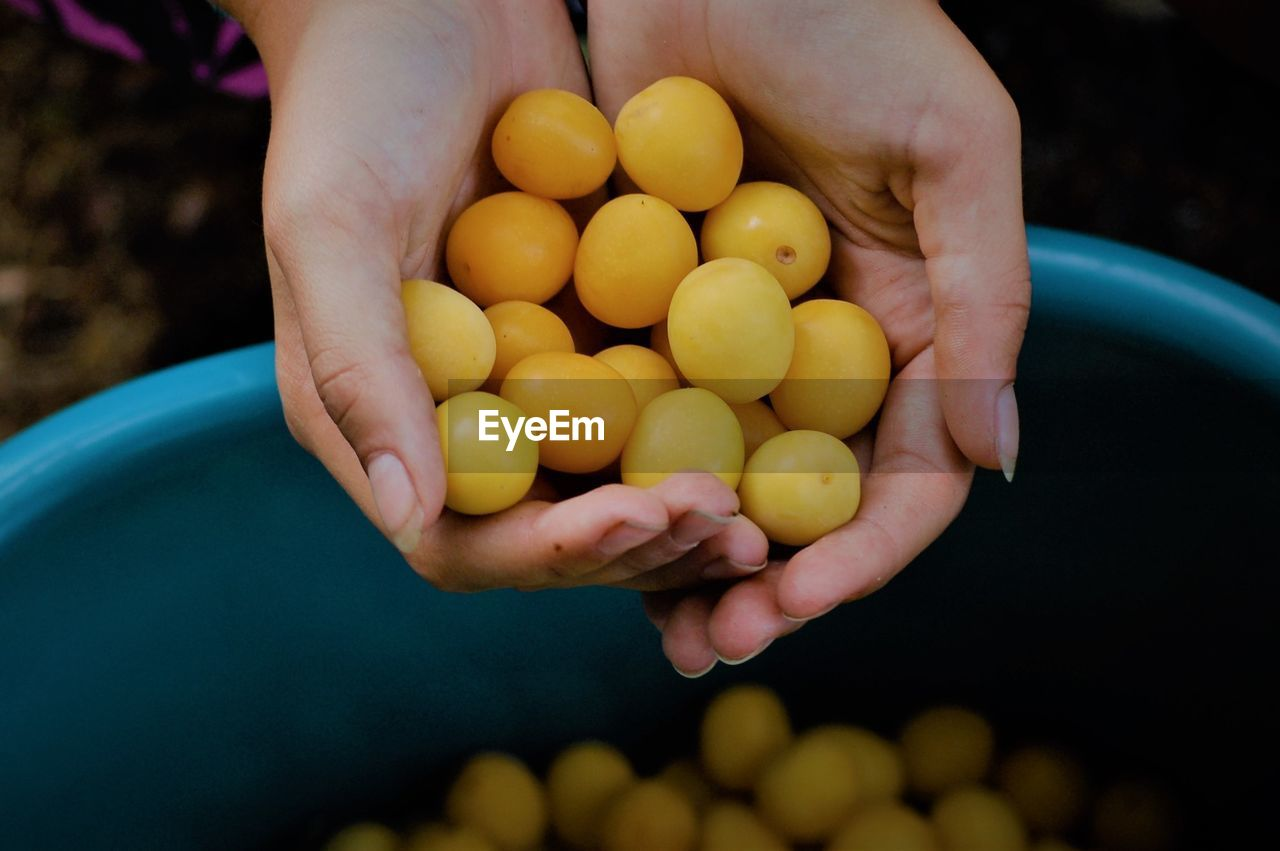 Cropped image of hands holding fruits