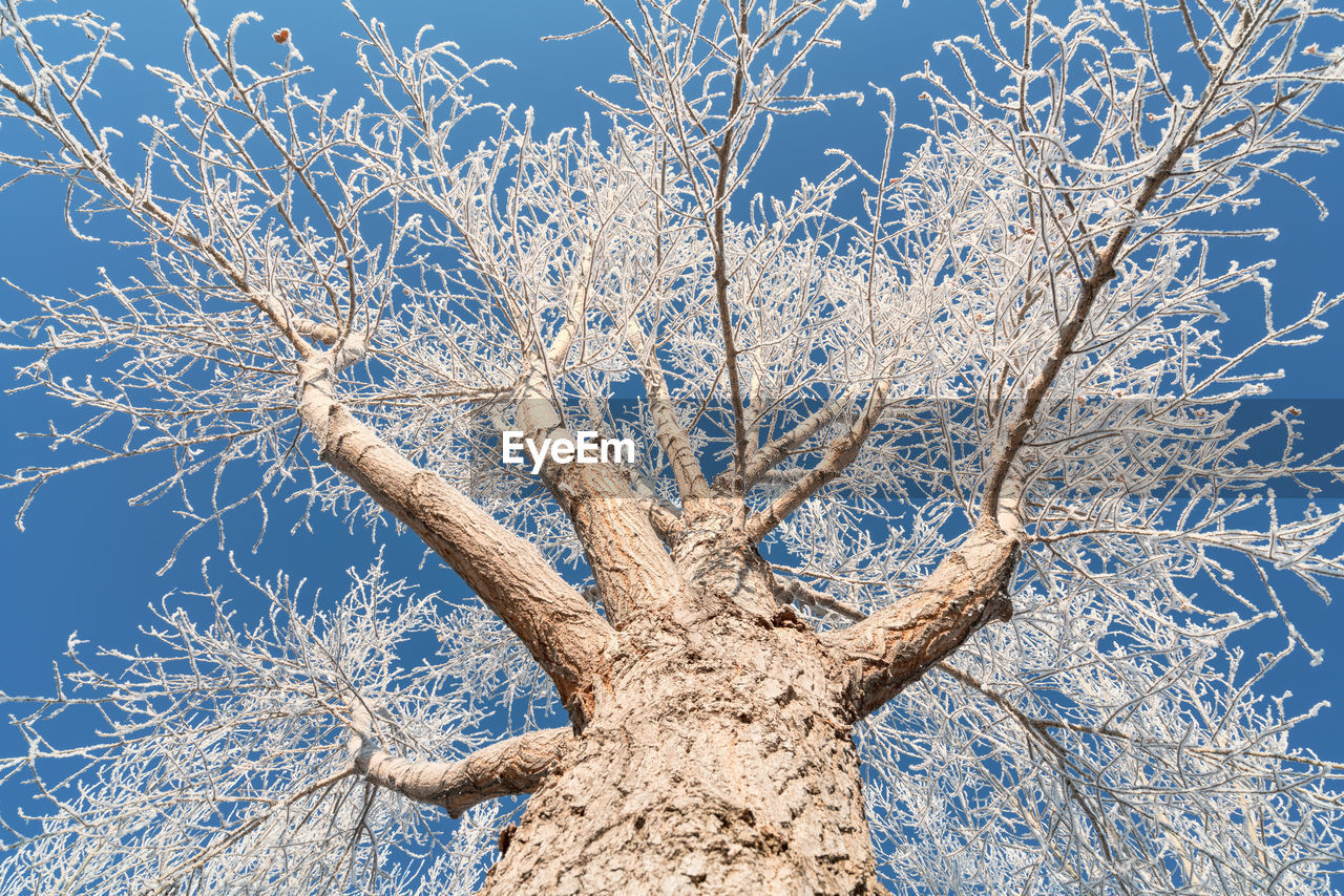tree, plant, bare tree, nature, no people, winter, snow, beauty in nature, branch, cold temperature, sky, low angle view, day, tranquility, land, trunk, clear sky, frozen, tree trunk, outdoors, dead plant