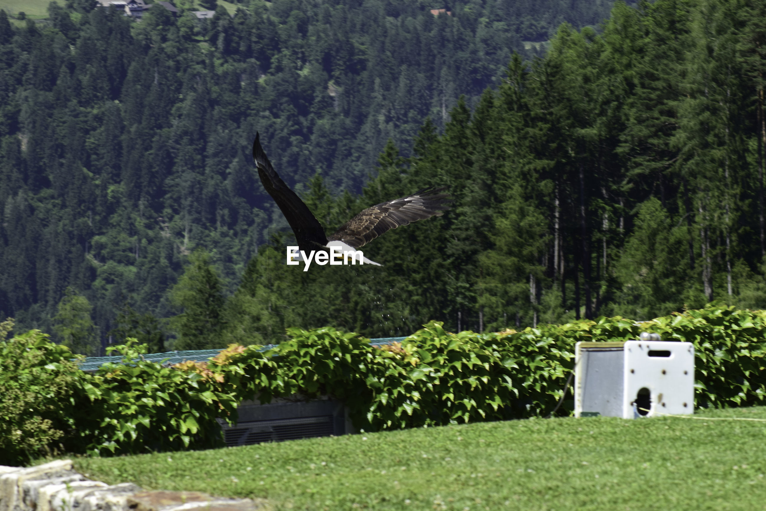 VIEW OF BIRD FLYING OVER TREES