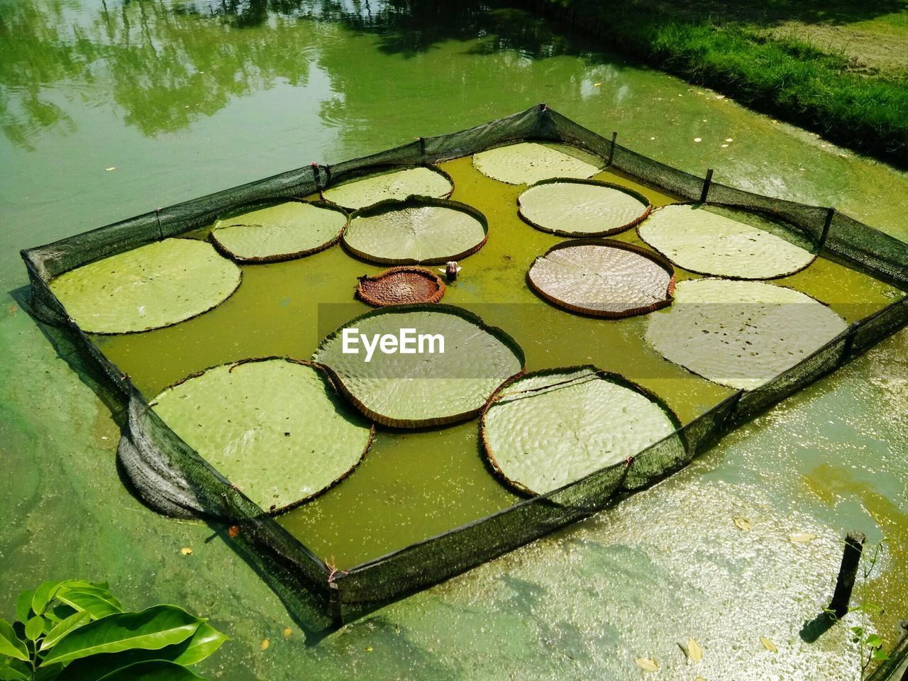 water, high angle view, no people, reflection, day, floating on water, outdoors, lily pad, nature, close-up, freshness