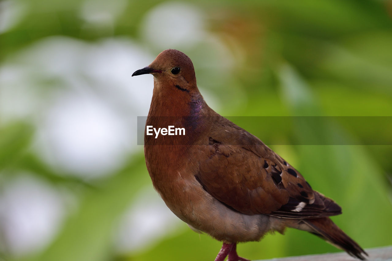 bird, vertebrate, animal themes, animal, one animal, animals in the wild, perching, close-up, animal wildlife, focus on foreground, no people, day, nature, outdoors, plant, green color, brown, branch, plant part, beauty in nature