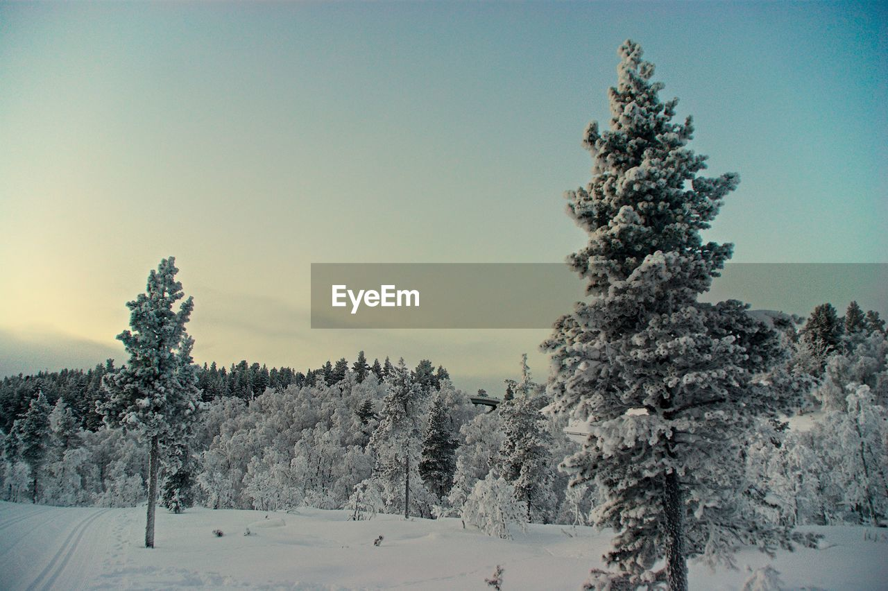 tree, plant, winter, sky, snow, cold temperature, beauty in nature, tranquility, tranquil scene, nature, no people, scenics - nature, day, growth, environment, covering, non-urban scene, land, outdoors, pine tree, coniferous tree