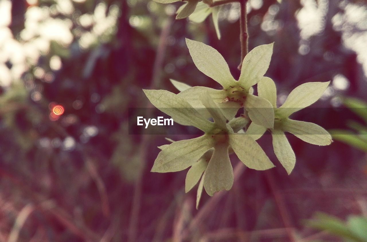 growth, nature, focus on foreground, no people, plant, close-up, beauty in nature, flower, fragility, outdoors, day, tree, freshness, flower head