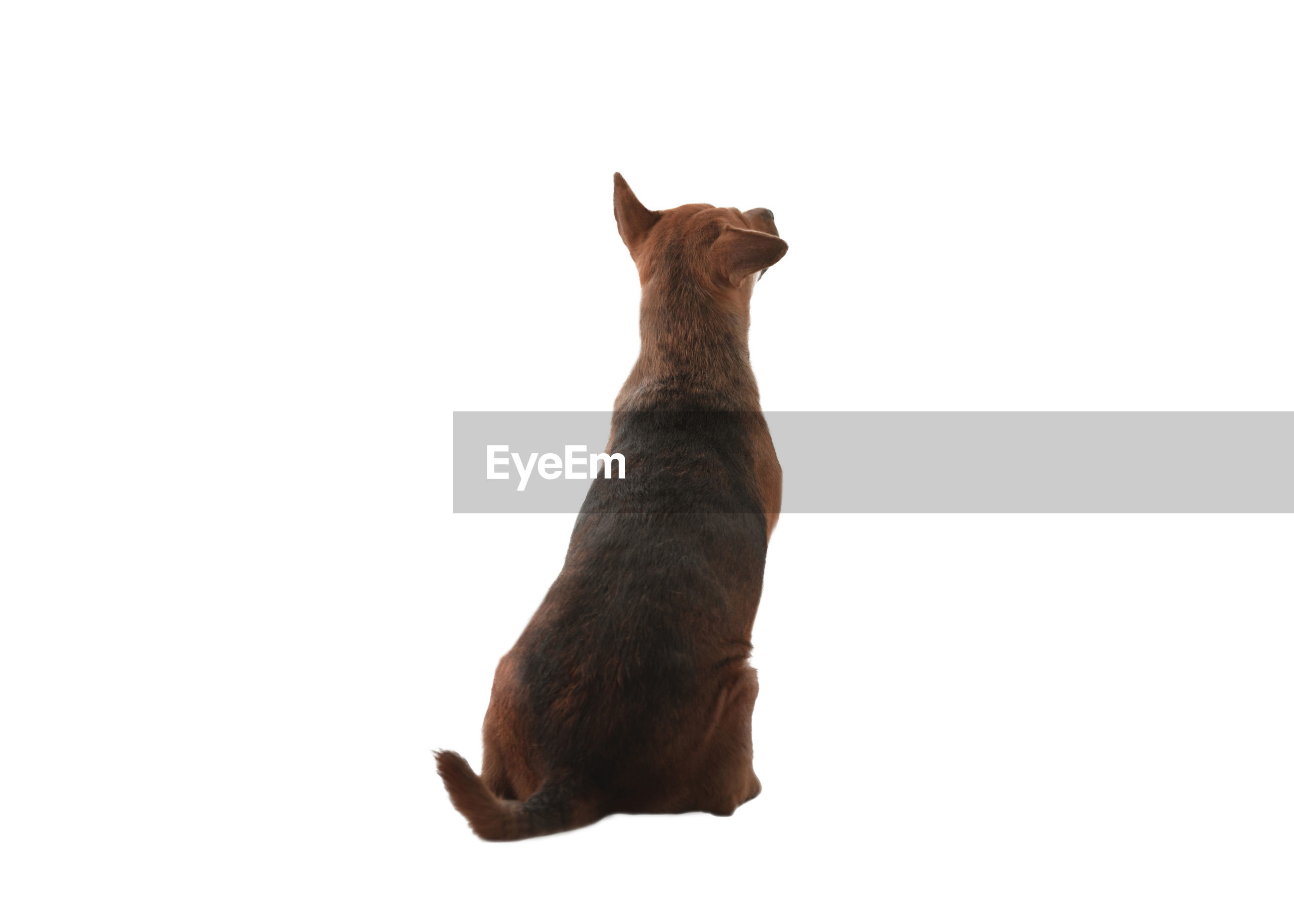 VIEW OF A CAT OVER WHITE BACKGROUND