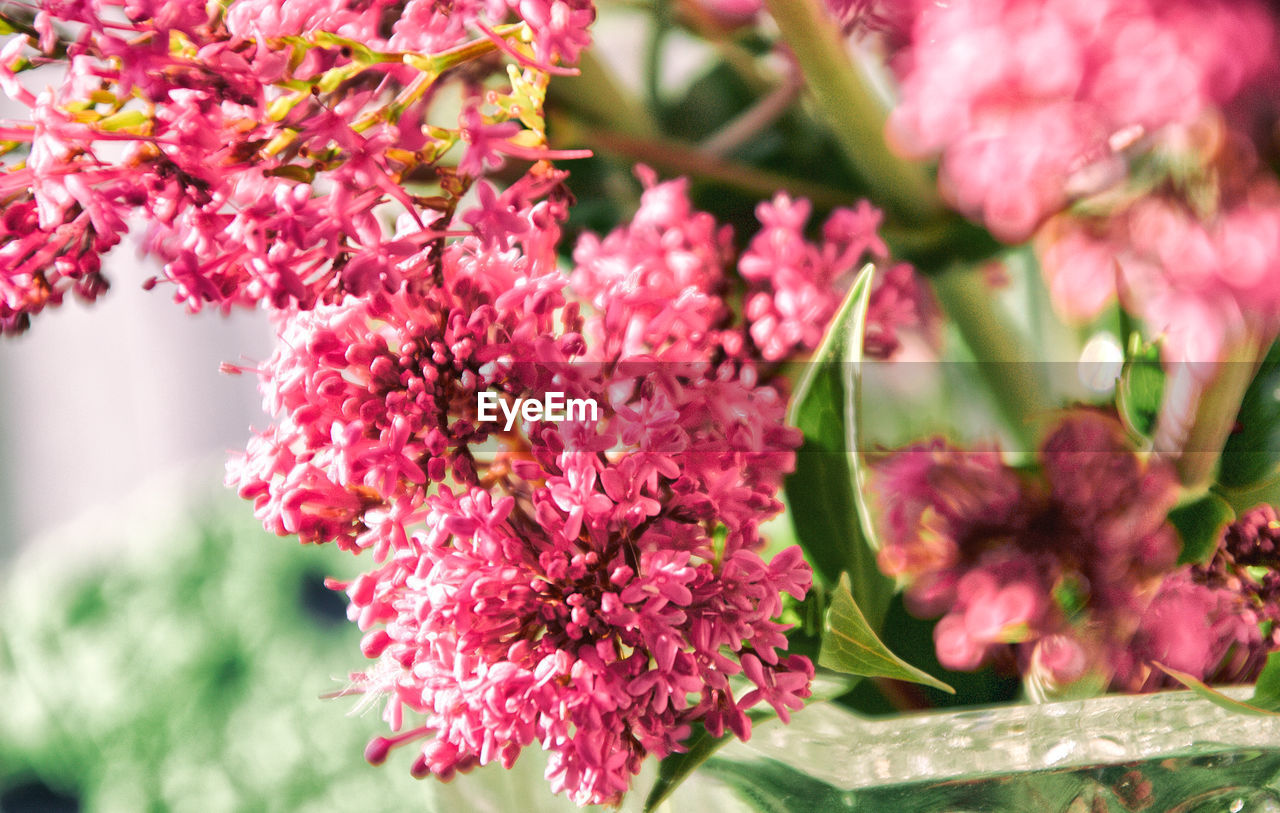growth, flower, fragility, beauty in nature, nature, freshness, pink color, no people, plant, outdoors, close-up, day, lilac, blooming, flower head