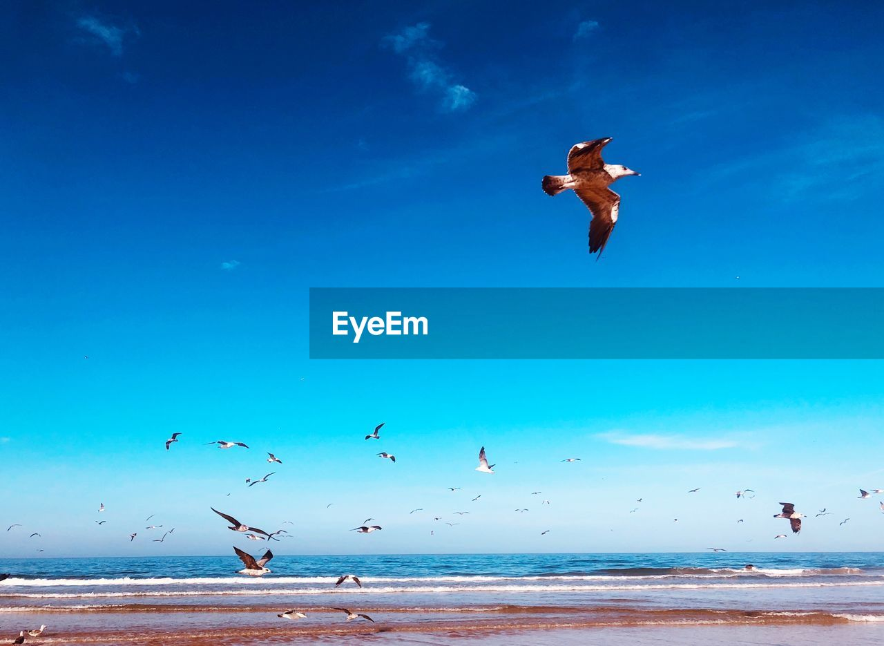 sea, water, sky, blue, beach, mid-air, flying, nature, beauty in nature, animal wildlife, land, motion, scenics - nature, animal, group of animals, vertebrate, real people, animals in the wild, animal themes, horizon over water, outdoors