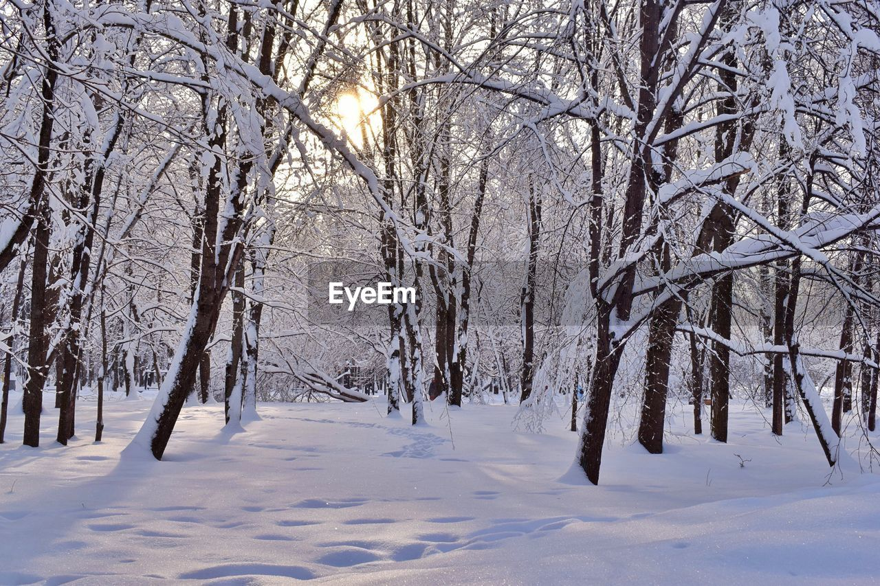 snow, winter, cold temperature, bare tree, nature, tranquility, beauty in nature, tranquil scene, weather, white color, cold, tree, no people, scenics, outdoors, landscape, day, branch, sky