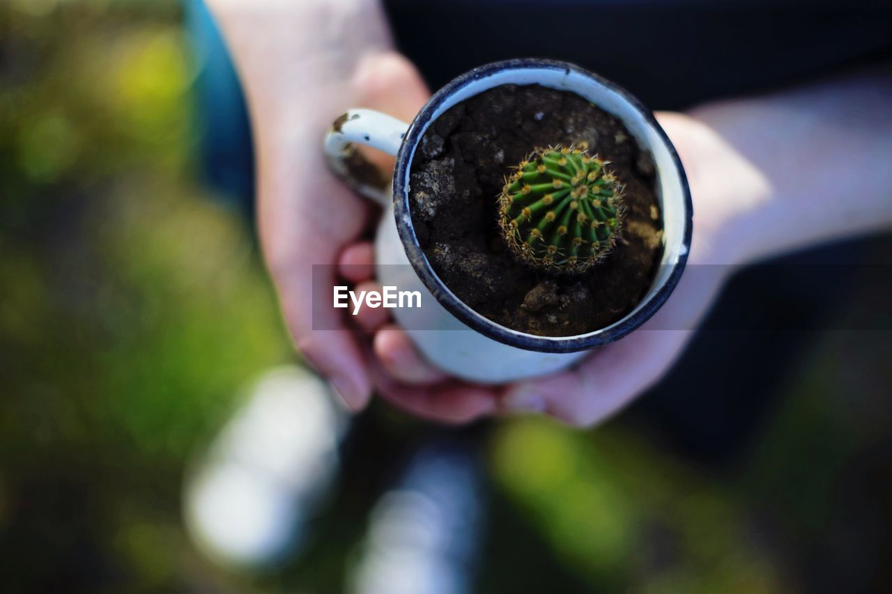 Low Section Of Person Holding Cactus In Mug