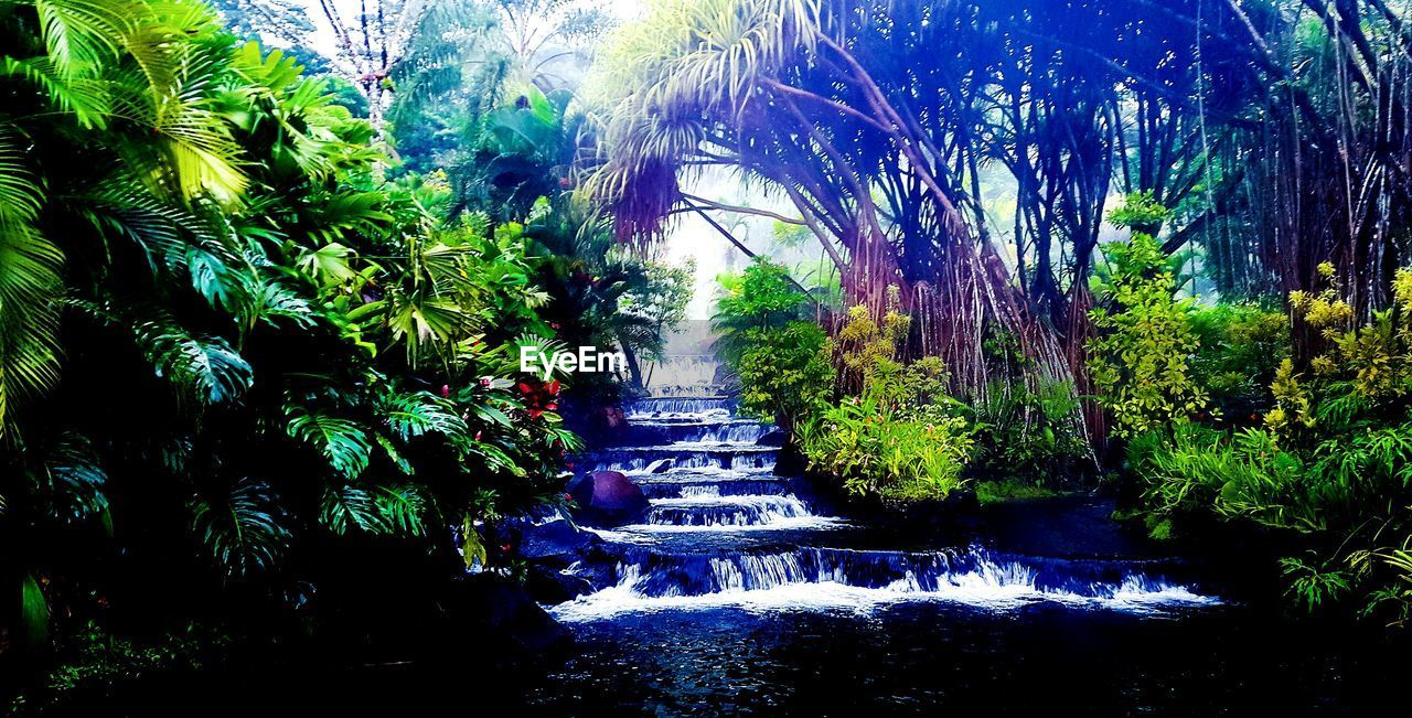 waterfall, nature, growth, tree, motion, forest, beauty in nature, water, no people, plant, scenics, outdoors, foliage, day