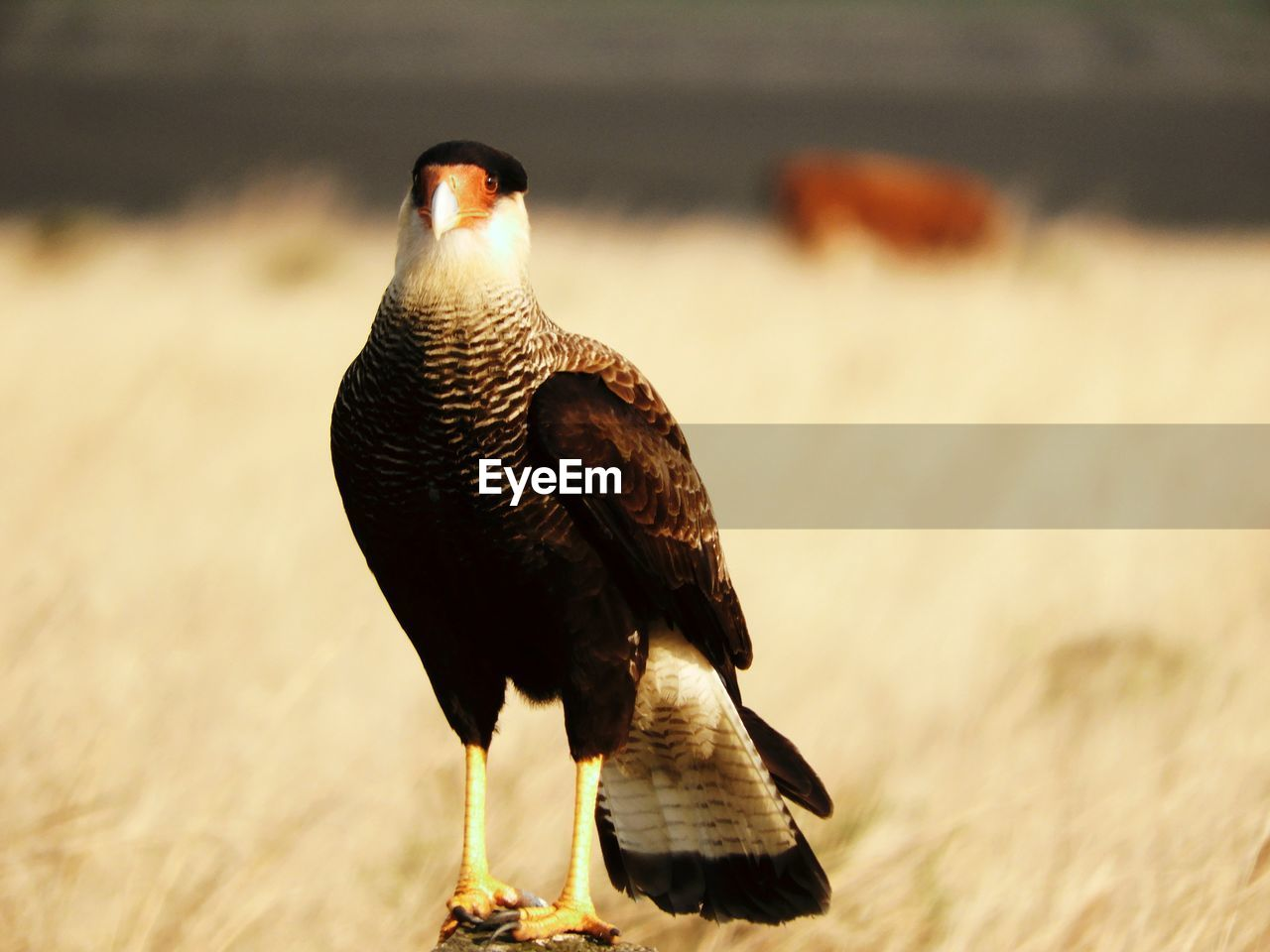 bird, animal themes, animals in the wild, one animal, animal wildlife, focus on foreground, nature, perching, no people, day, outdoors, bird of prey, close-up