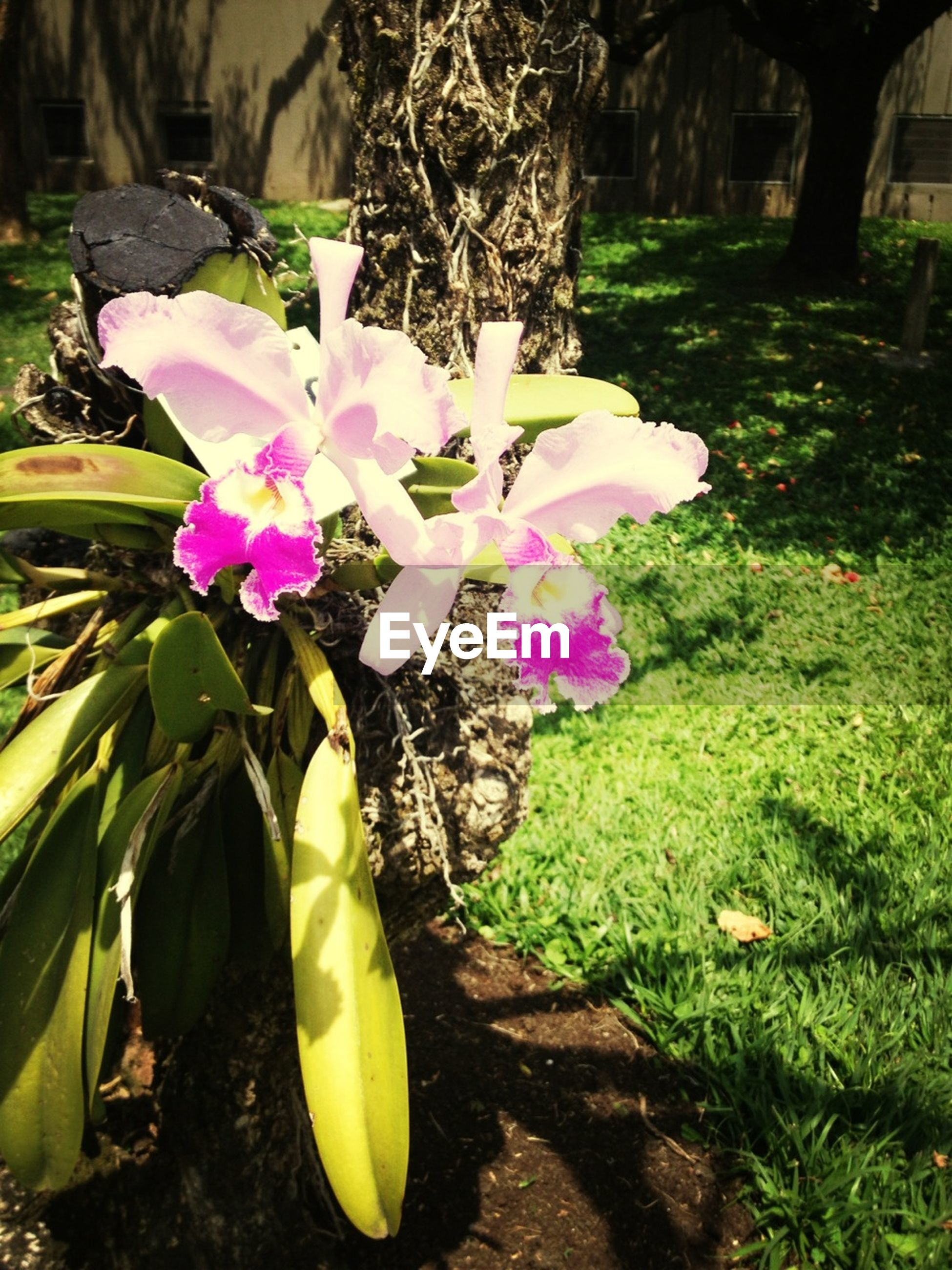 flower, petal, freshness, growth, fragility, flower head, beauty in nature, nature, blooming, pink color, plant, leaf, purple, in bloom, blossom, high angle view, no people, day, botany, close-up