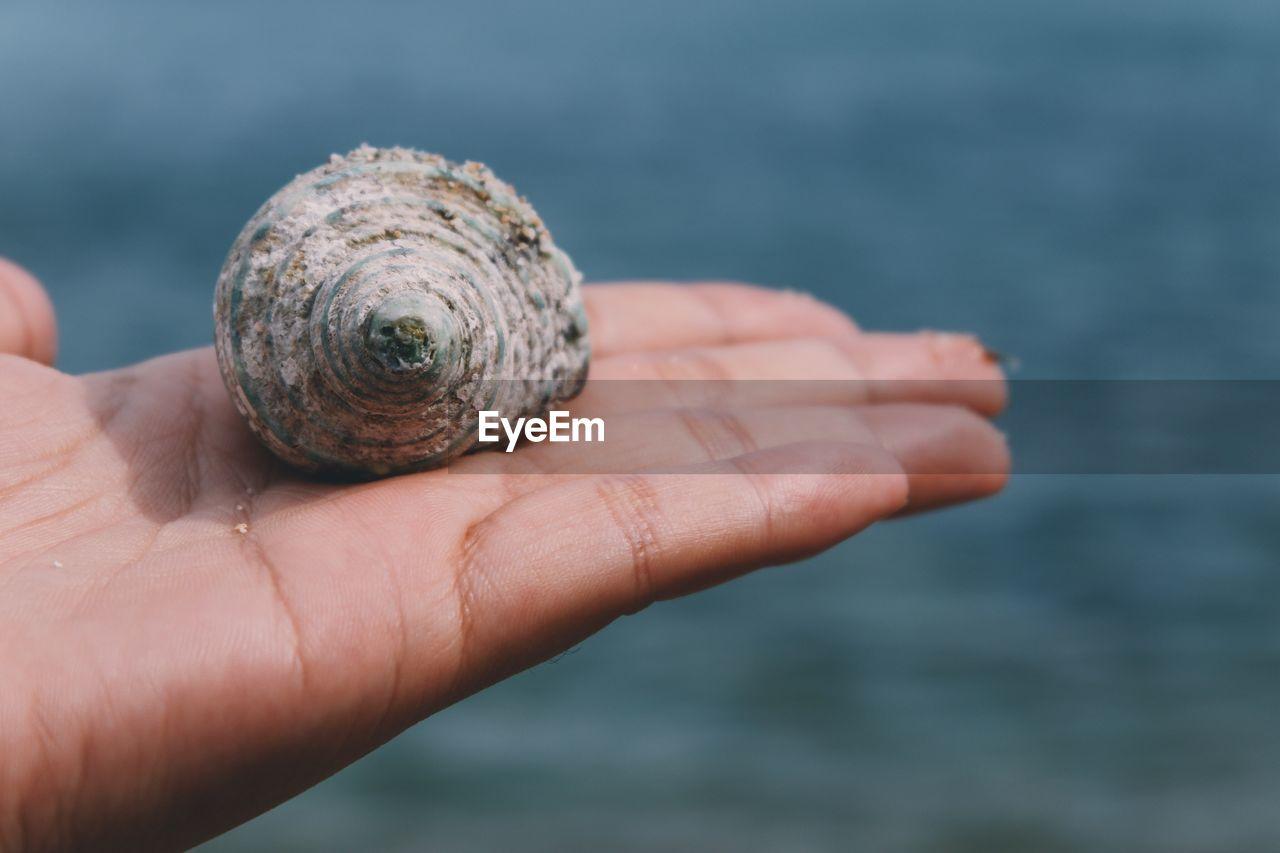 Close-Up Of Seashell On Hand