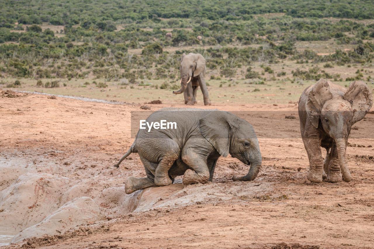 VIEW OF ELEPHANT WALKING ON STREET