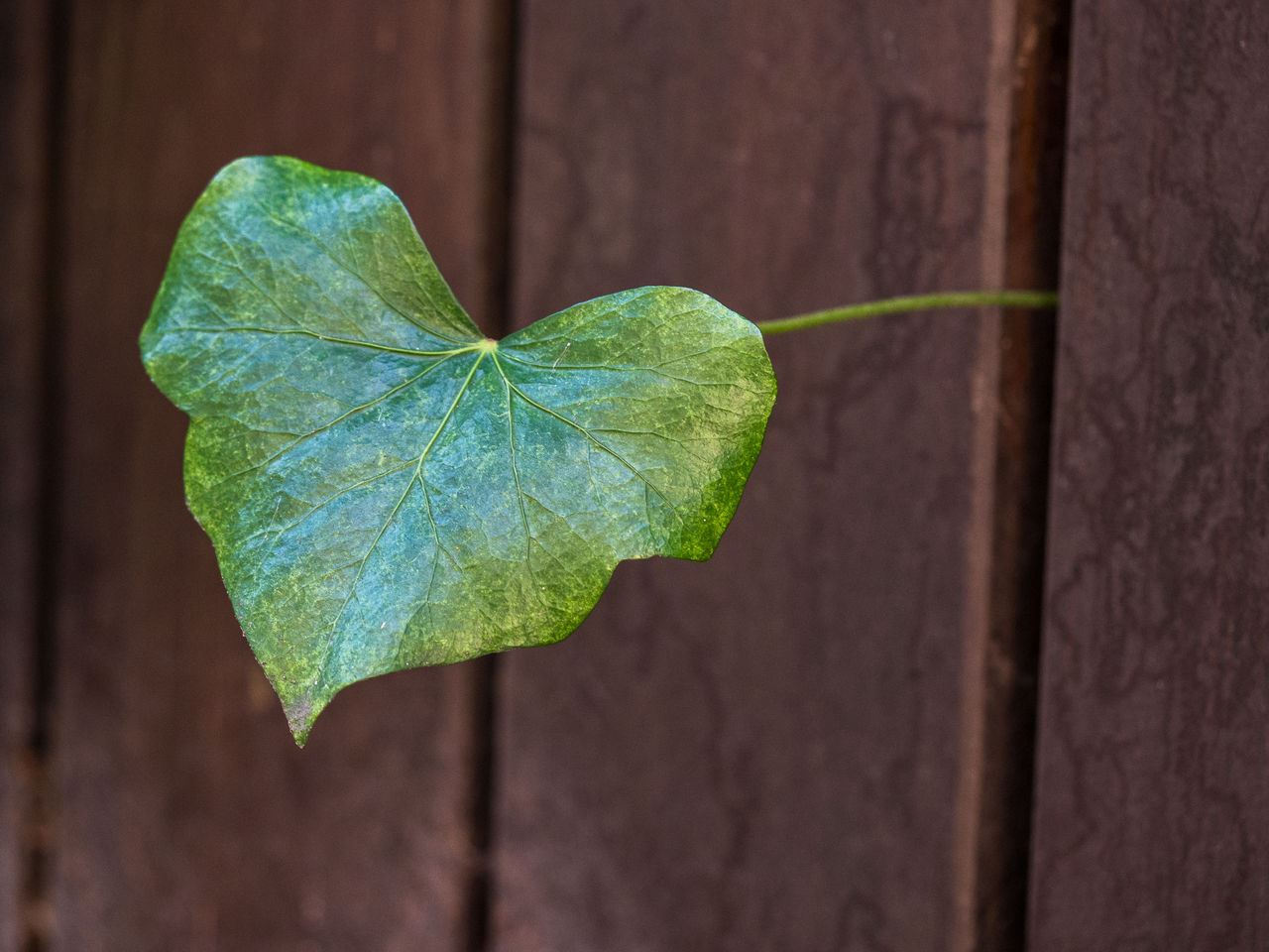 leaf, green color, close-up, plant, growth, no people, nature, focus on foreground, day, fragility, outdoors, freshness, beauty in nature