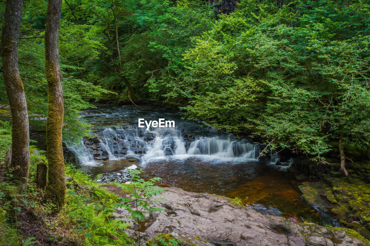 nature, forest, waterfall, beauty in nature, tree, scenics, motion, no people, tranquil scene, tranquility, water, outdoors, green color, plant, growth, day, freshness