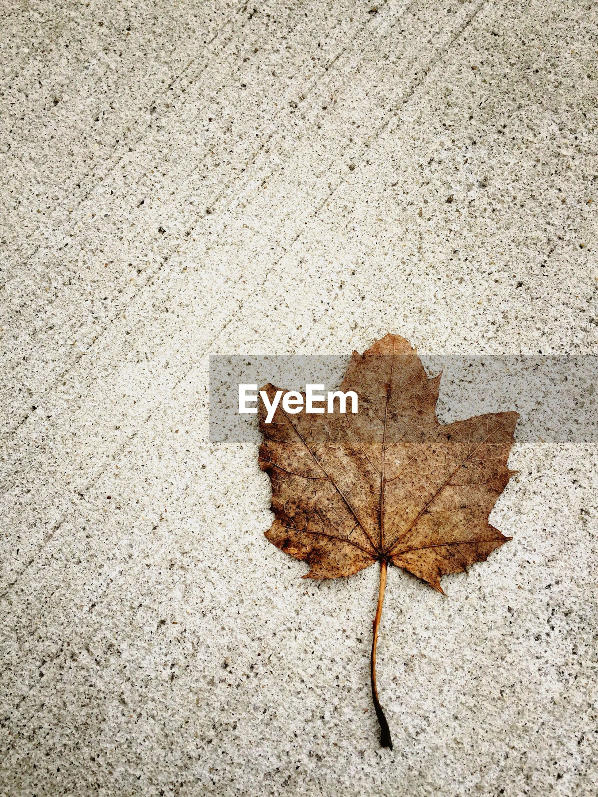 Close-up of dry leaf on floor
