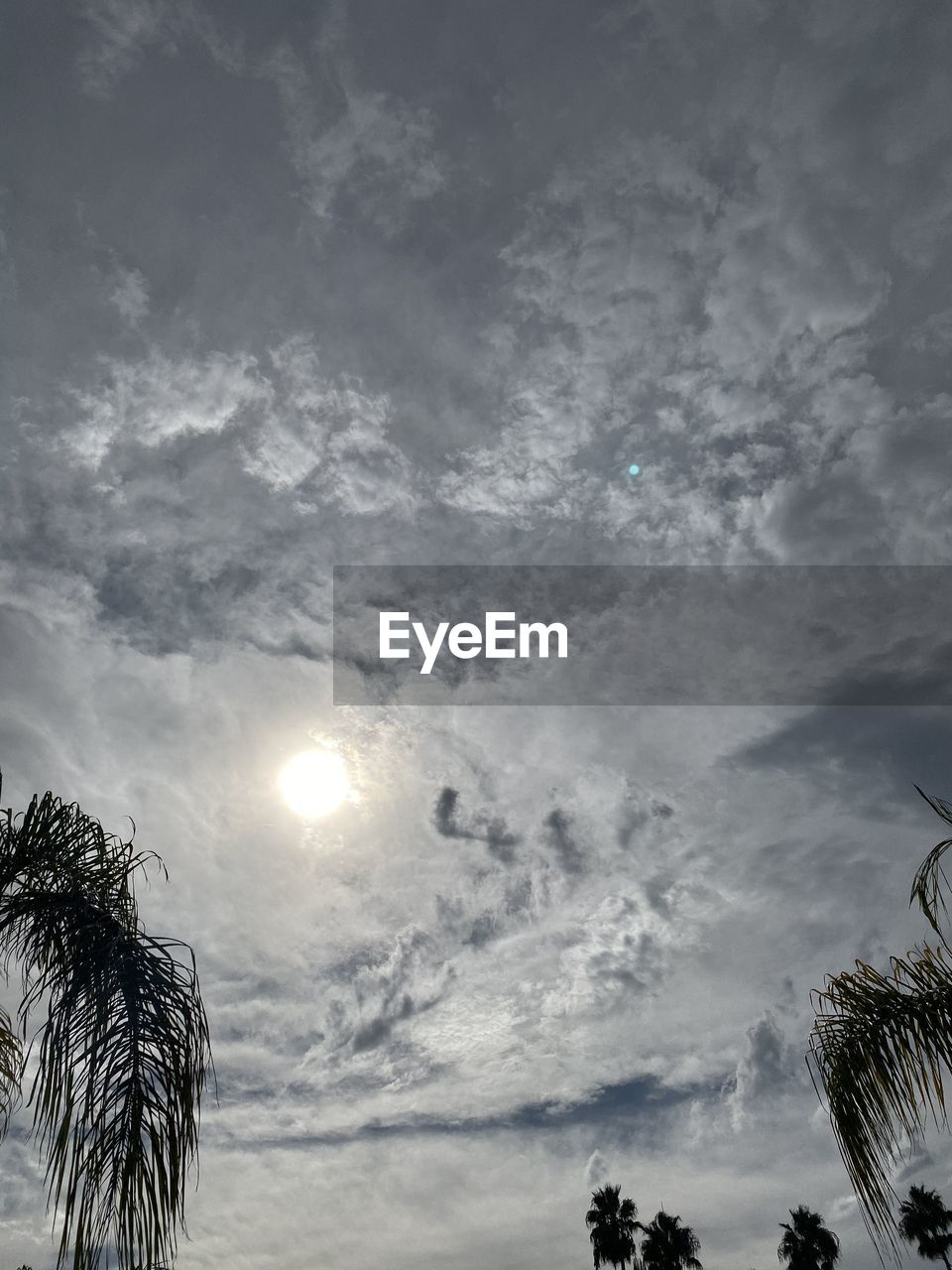 sky, cloud - sky, tree, low angle view, plant, beauty in nature, nature, no people, tranquility, palm tree, tropical climate, scenics - nature, tranquil scene, moon, sun, outdoors, silhouette, sunlight, sunbeam, moonlight, palm leaf, ominous