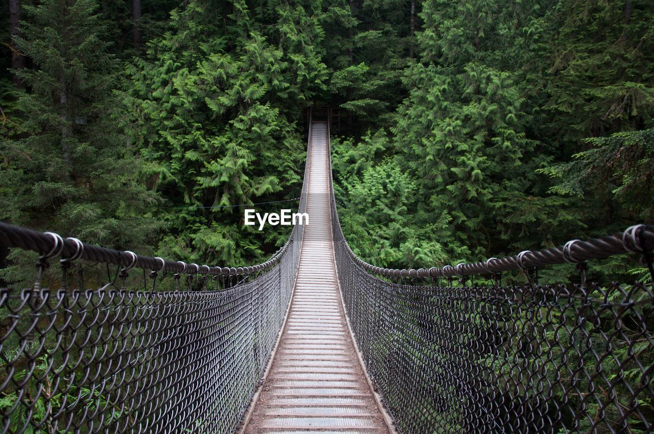 Empty Footbridge Against Trees In Forest
