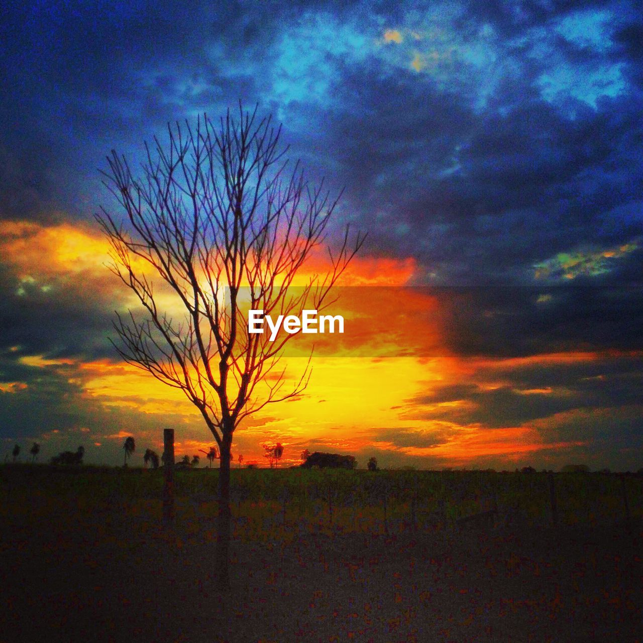 sunset, landscape, sky, nature, field, silhouette, lone, beauty in nature, tree, horizon over land, tranquility, scenics, bare tree, outdoors, no people