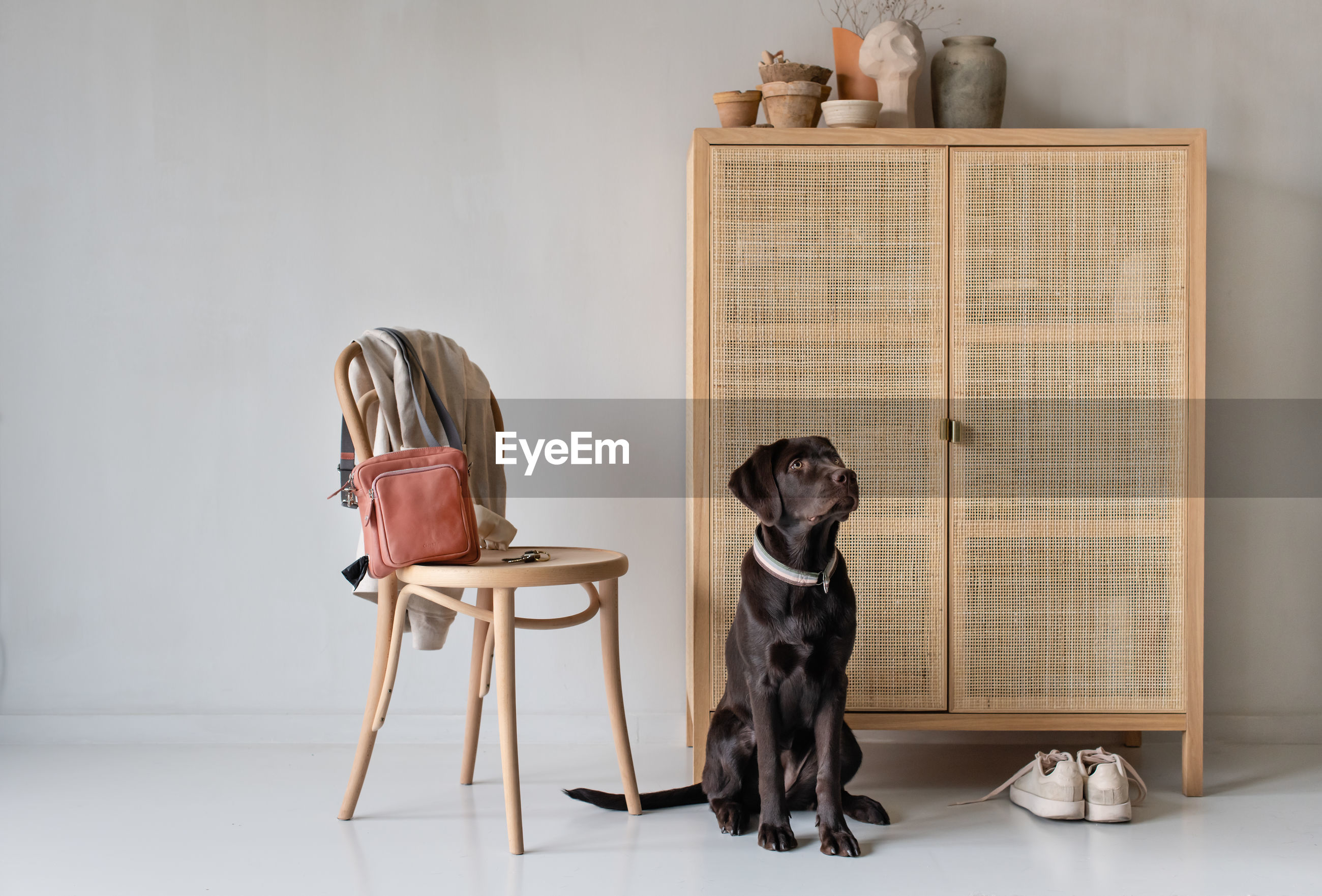 VIEW OF A DOG SITTING ON TABLE