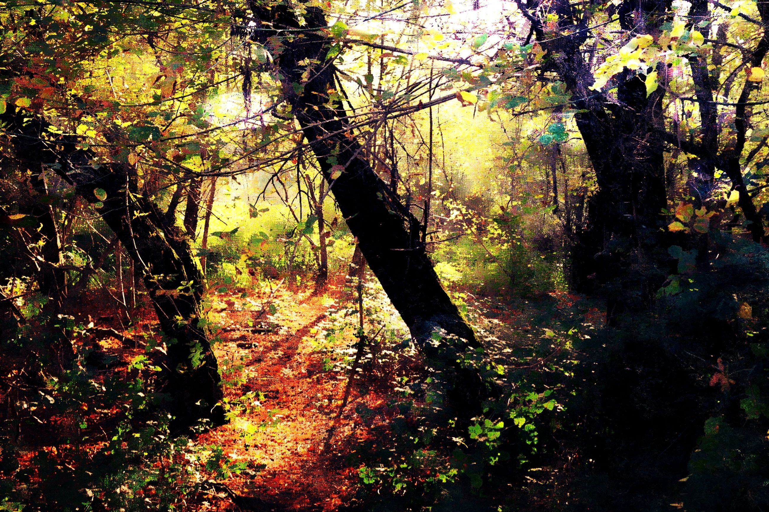tree, nature, forest, branch, growth, beauty in nature, tree trunk, tranquil scene, tranquility, change, day, leaf, scenics, autumn, no people, outdoors