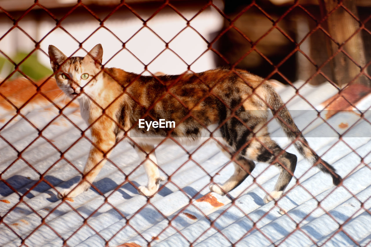 Cat Seen Through Chainlink Fence