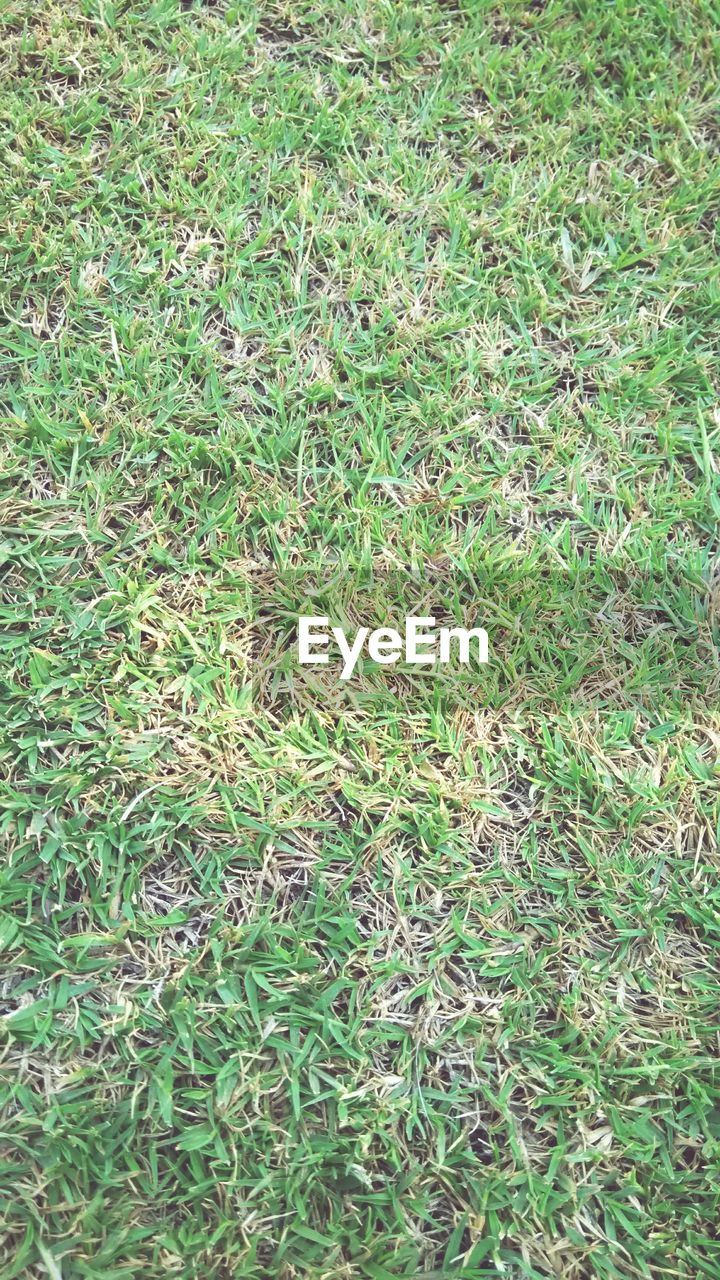 grass, green color, no people, full frame, backgrounds, field, nature, day, outdoors, plant, growth, close-up
