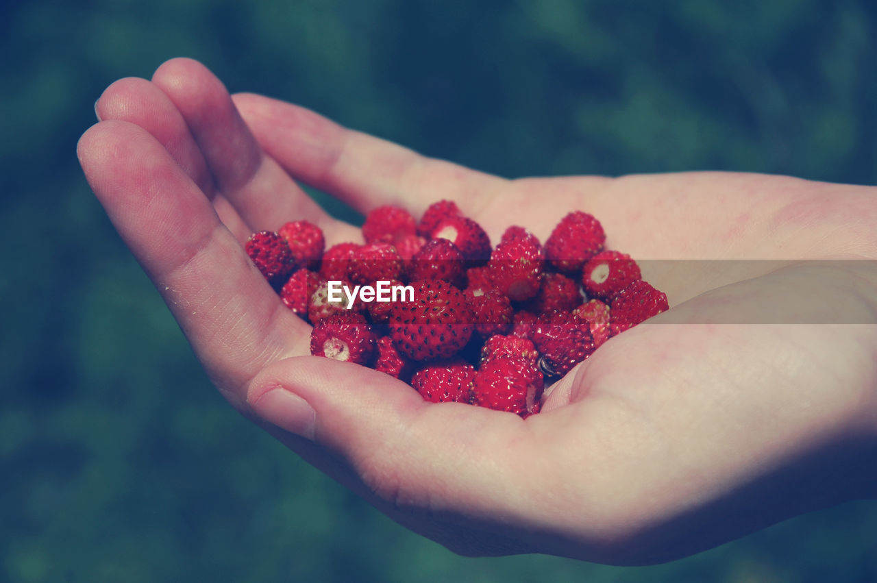 Close-Up Of Hand Holding Wild Strawberries