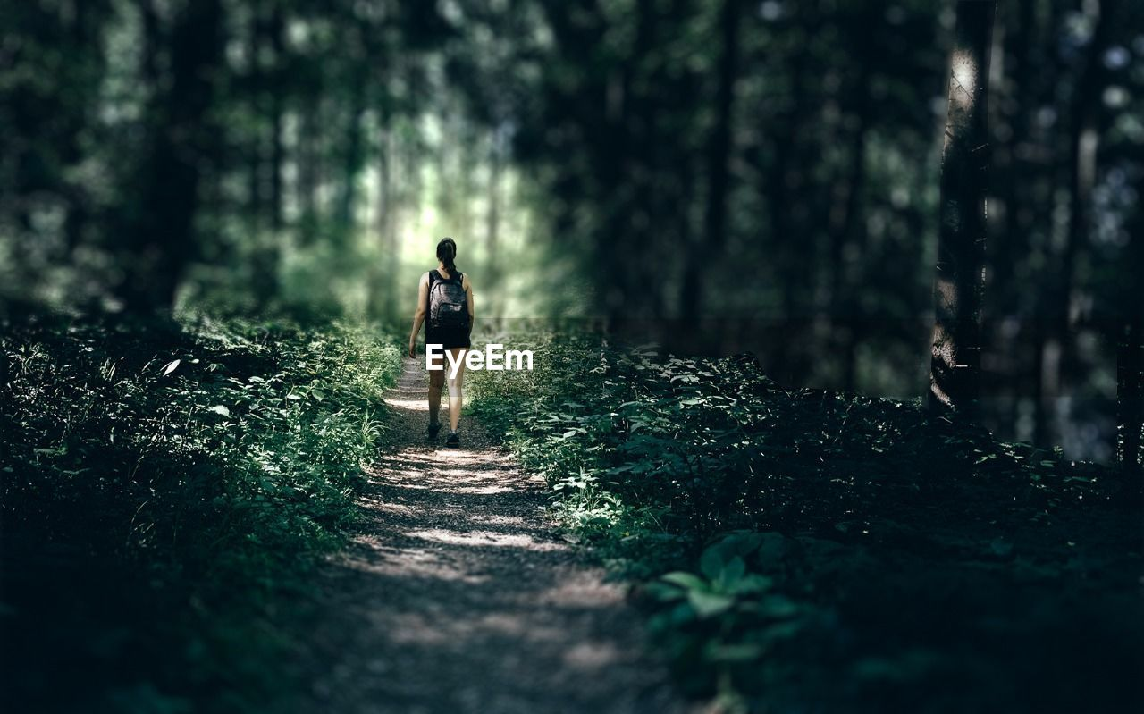 forest, tree, walking, nature, footpath, adventure, rear view, one person, the way forward, full length, woodland, real people, scenics, hiking, beauty in nature, outdoors, women, day, lifestyles, walkway, tilt-shift, adult, people