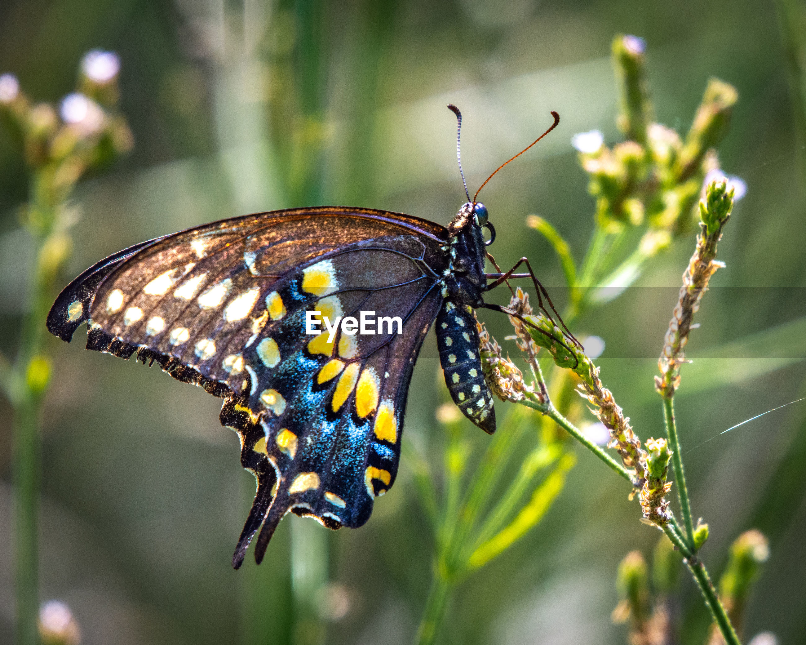 Side view of butterfly pollinating flower