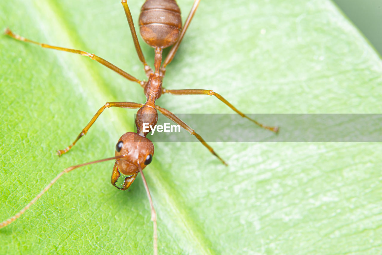 animal themes, animal wildlife, animal, invertebrate, insect, one animal, animals in the wild, close-up, plant part, leaf, no people, green color, day, animal body part, zoology, nature, focus on foreground, ant, outdoors, arthropod, animal leg