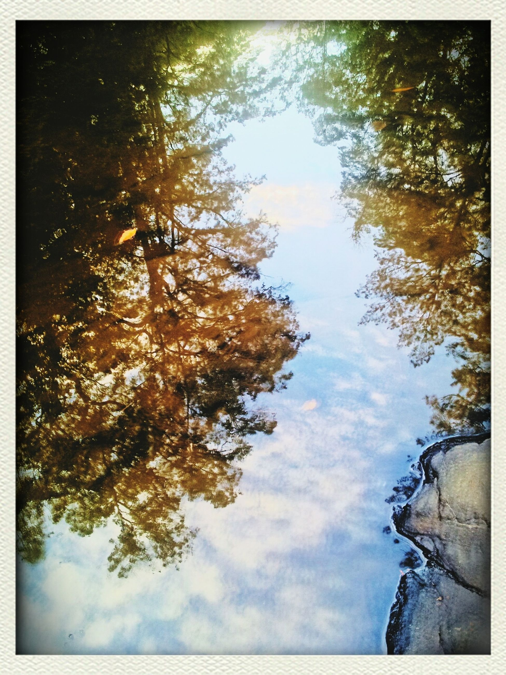 transfer print, tree, auto post production filter, sky, tranquility, water, beauty in nature, nature, tranquil scene, reflection, scenics, lake, branch, cloud - sky, growth, outdoors, low angle view, day, no people, idyllic
