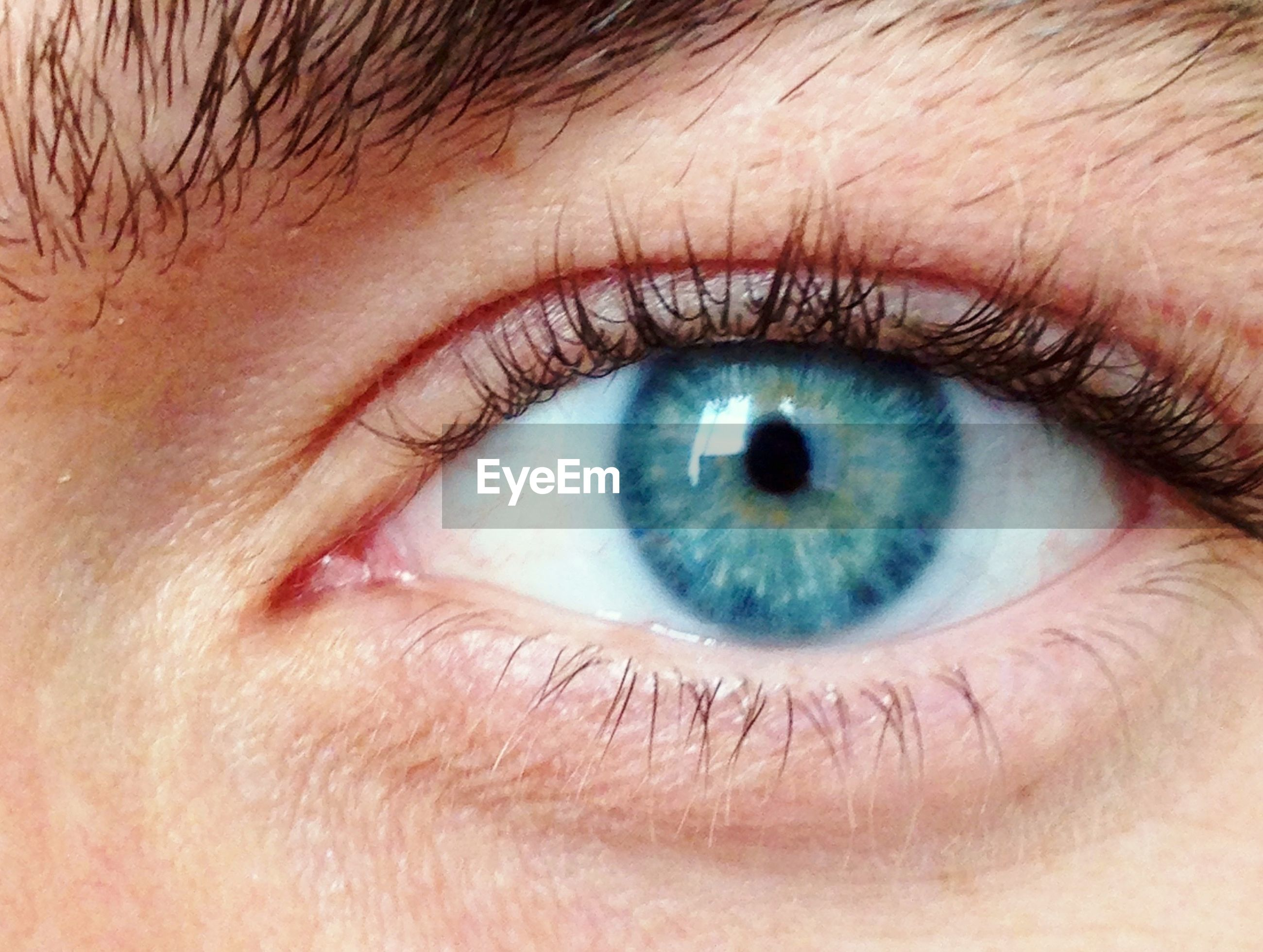 human eye, eyelash, eyesight, close-up, sensory perception, iris - eye, human skin, part of, eyeball, extreme close-up, looking at camera, eyebrow, human face, portrait, lifestyles, indoors, extreme close up