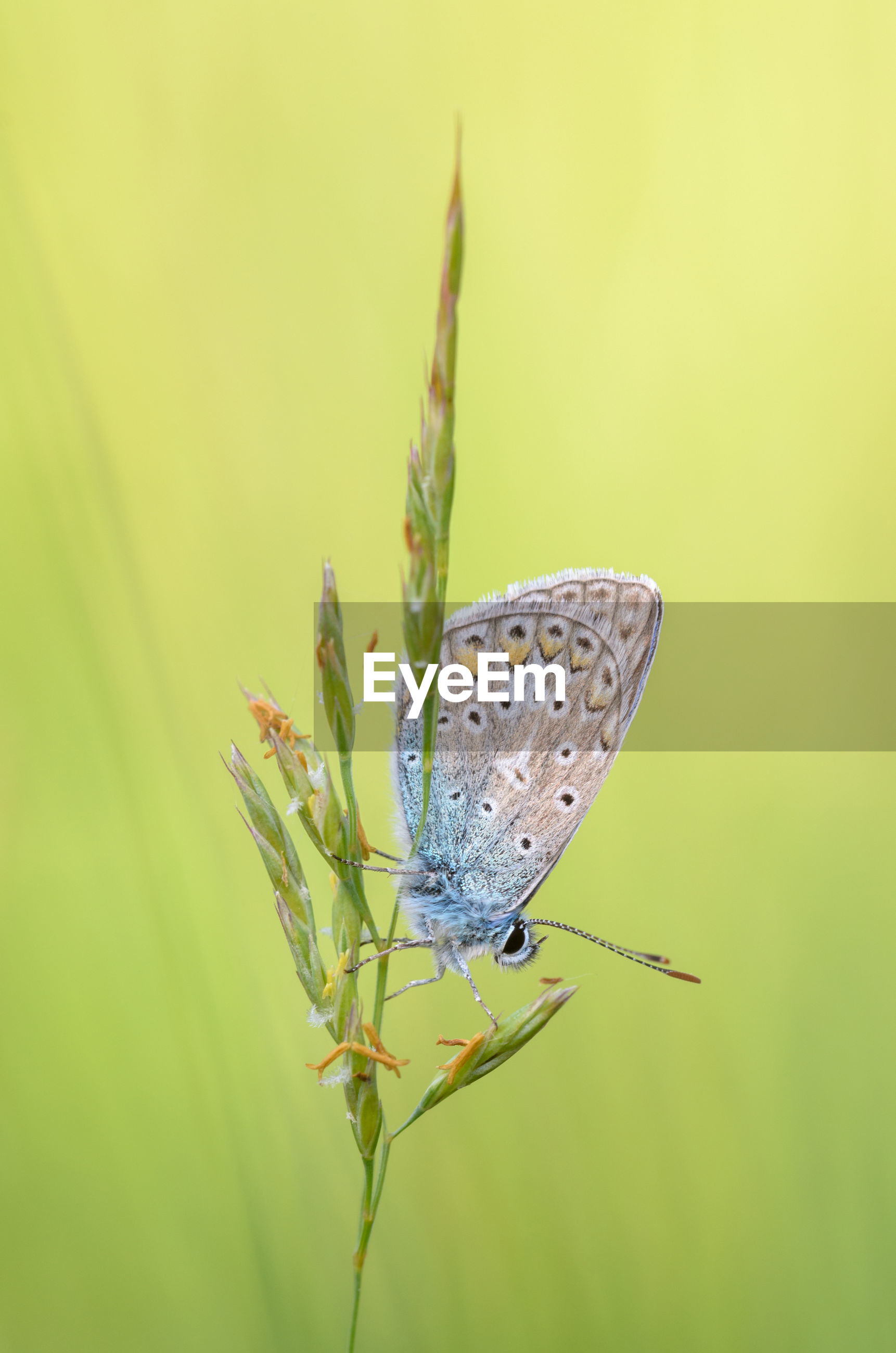 CLOSE-UP OF BUTTERFLY ON LEAF OUTDOORS