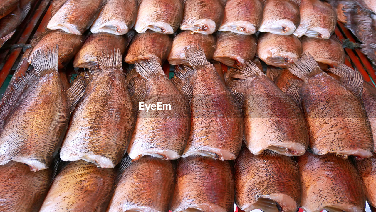 food and drink, food, seafood, freshness, raw food, meat, in a row, fish, close-up, fish market, healthy eating, no people, arrangement, large group of objects, market, day, indoors