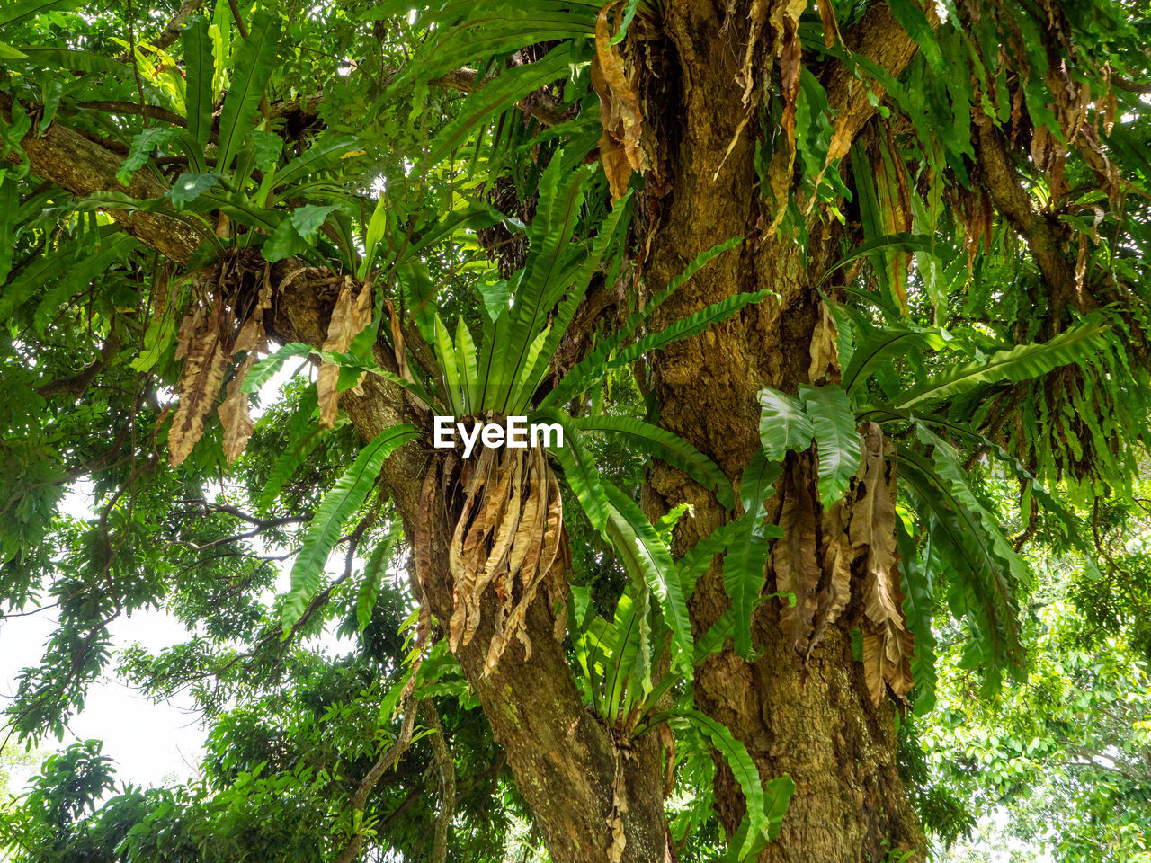 plant, tree, growth, tree trunk, trunk, nature, green color, no people, plant part, leaf, beauty in nature, tranquility, day, forest, outdoors, land, tropical climate, palm tree, branch, foliage, bark, tropical tree, tree canopy