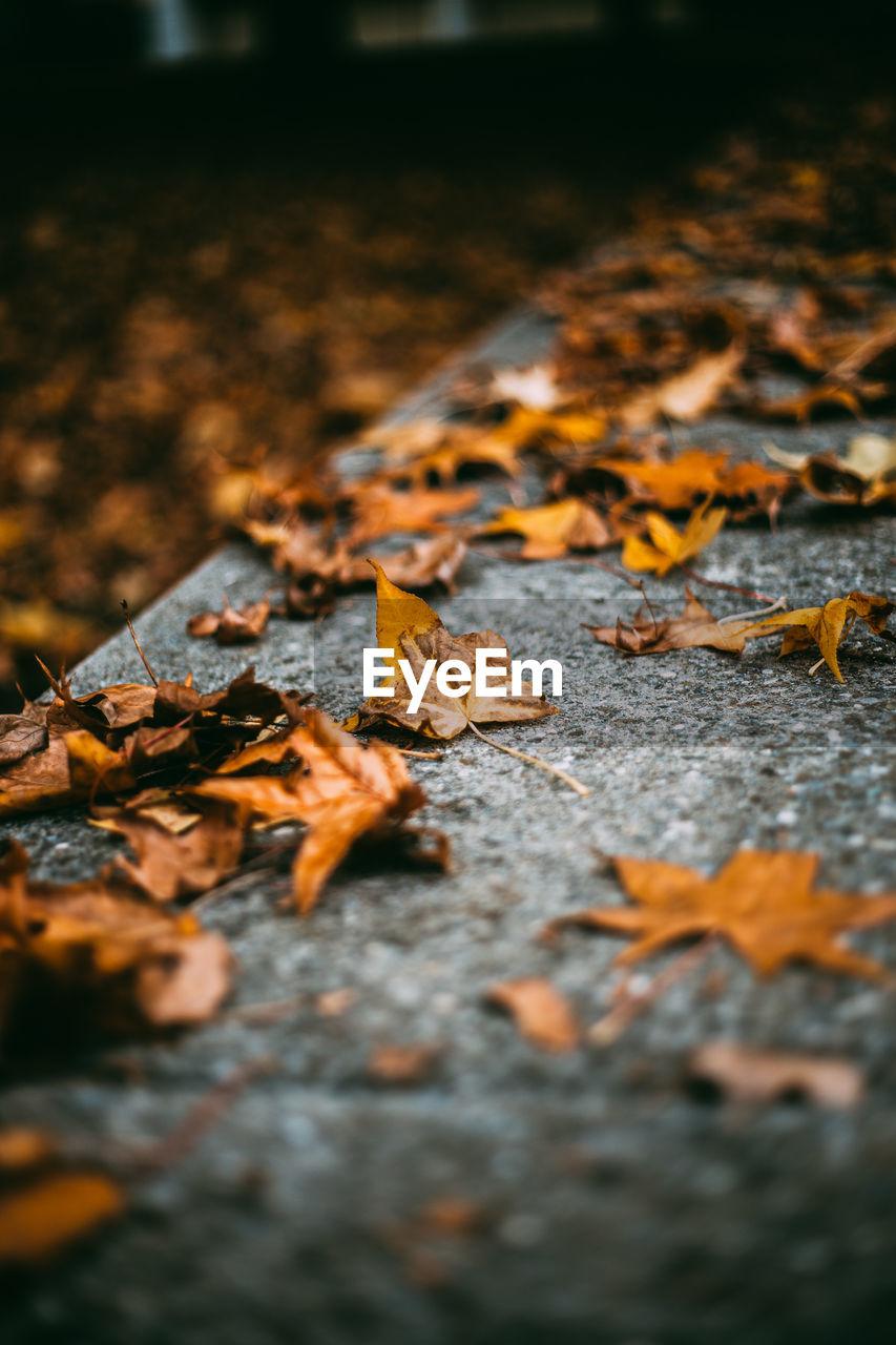 Autumn Leaves On Footpath