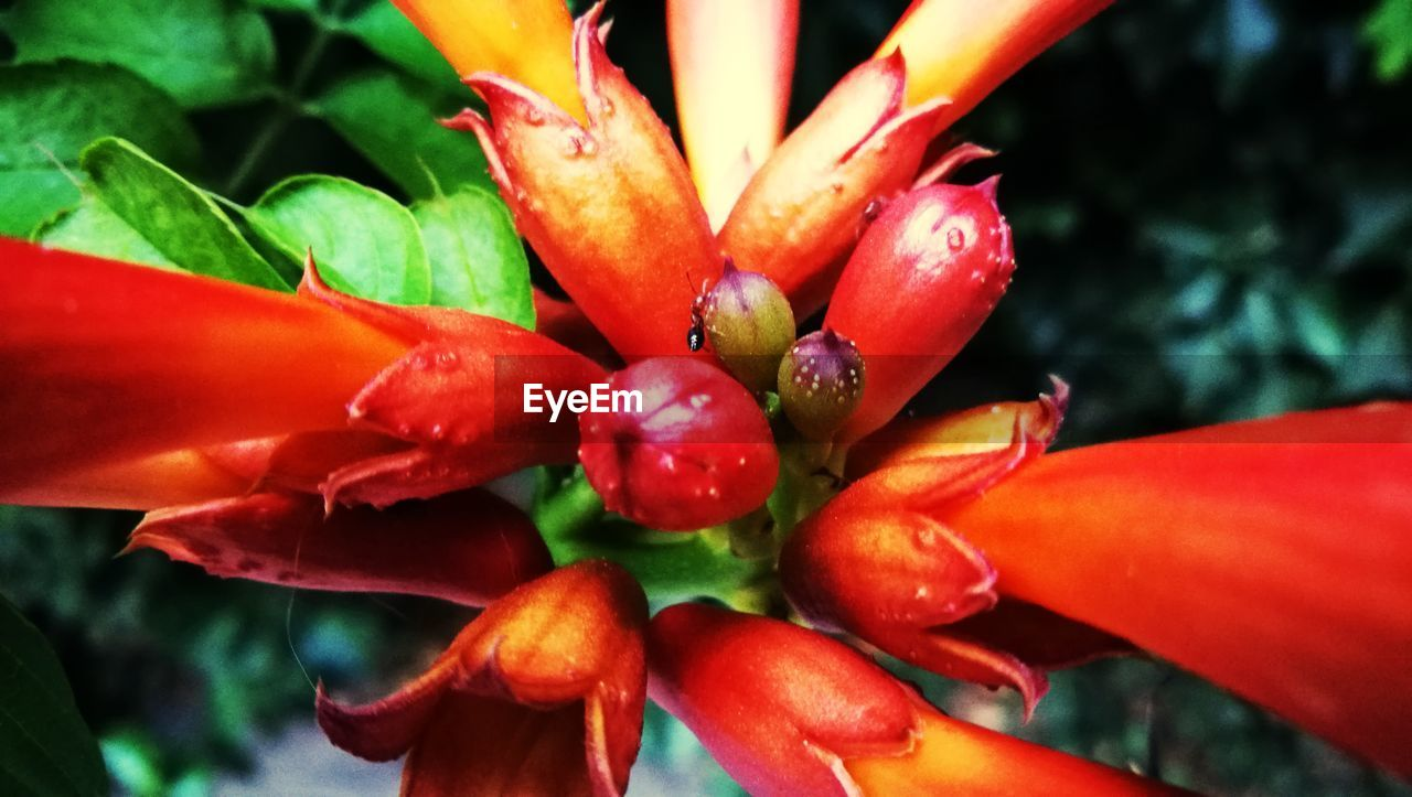 growth, red, nature, beauty in nature, day, freshness, outdoors, plant, close-up, leaf, no people, flower, healthy eating, flower head