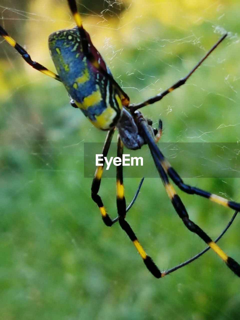 one animal, spider web, animal themes, animals in the wild, spider, insect, focus on foreground, close-up, nature, no people, animal wildlife, web, outdoors, day, animal leg