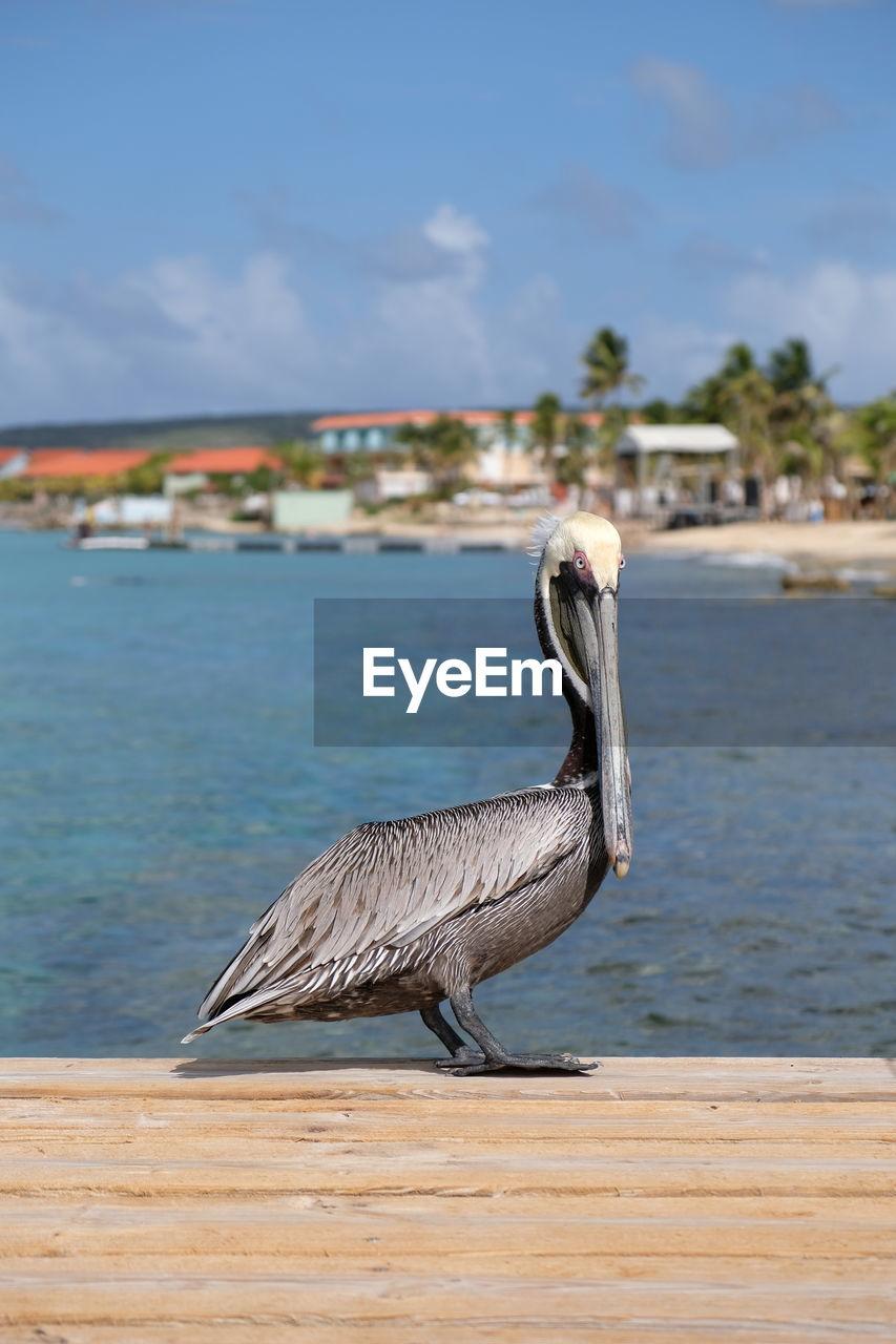 BIRD ON A BEACH