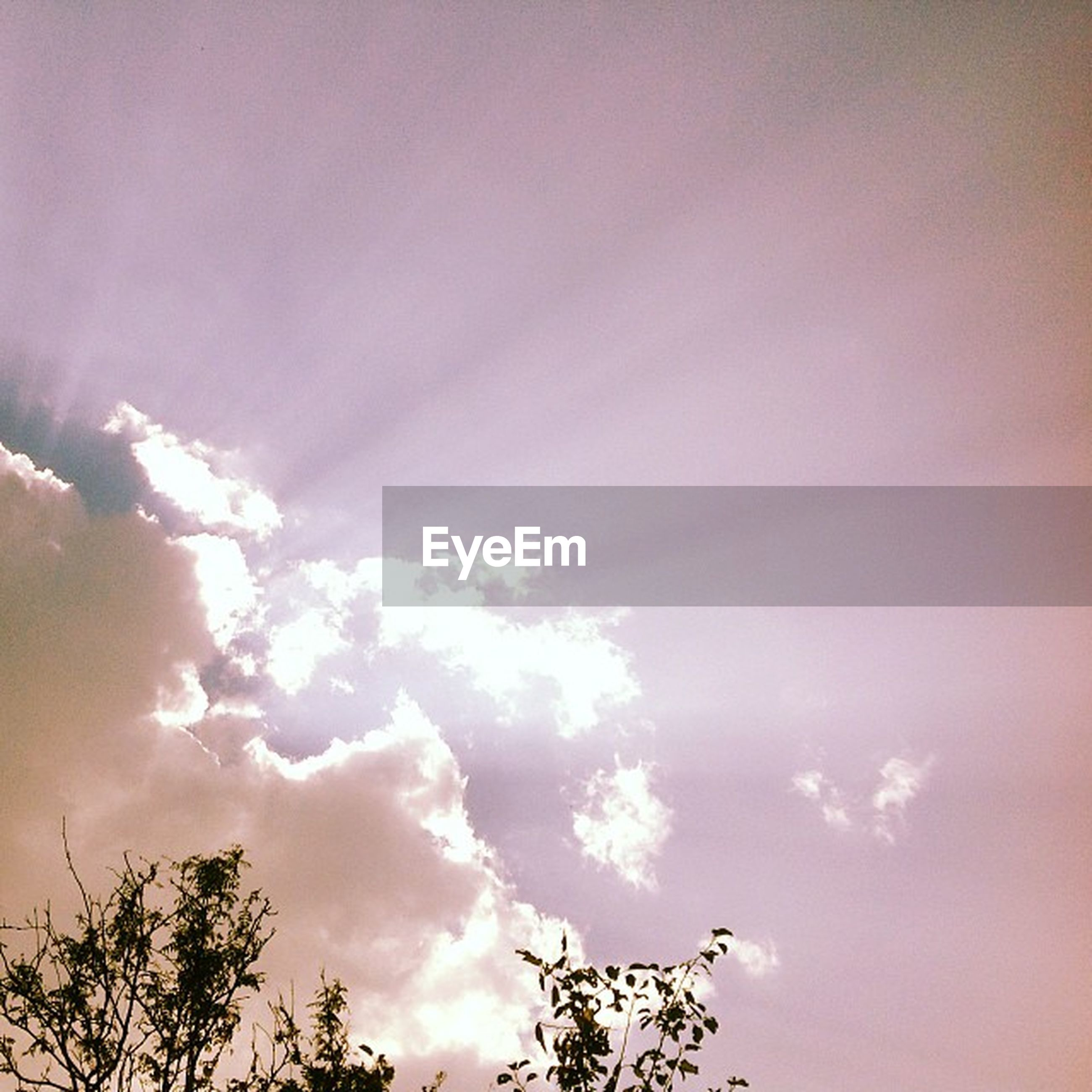 low angle view, sky, tree, beauty in nature, cloud - sky, nature, tranquility, scenics, silhouette, branch, high section, treetop, tranquil scene, growth, cloudy, cloud, outdoors, no people, sunset, idyllic