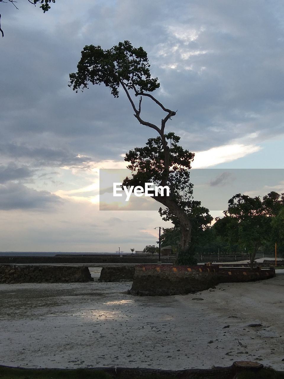 sky, cloud - sky, tree, water, plant, beauty in nature, nature, sunset, scenics - nature, tranquility, land, tranquil scene, beach, no people, sea, outdoors, growth, non-urban scene