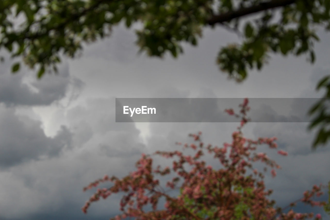 tree, plant, sky, beauty in nature, cloud - sky, low angle view, nature, tranquility, growth, no people, day, branch, outdoors, tranquil scene, leaf, scenics - nature, plant part, selective focus, focus on foreground