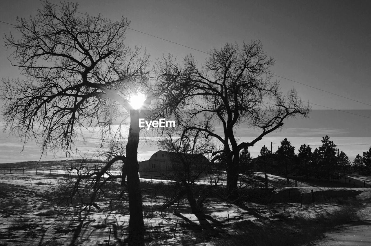 sun, winter, sunbeam, lens flare, nature, outdoors, tranquility, tree, beauty in nature, cold temperature, bare tree, snow, tranquil scene, water, scenics, silhouette, sky, no people, day