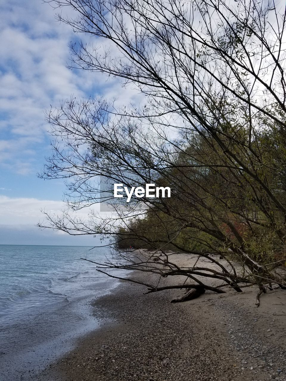 nature, tranquility, beauty in nature, tranquil scene, scenics, bare tree, sky, tree, sea, no people, outdoors, day, branch, water, landscape, horizon over water, beach