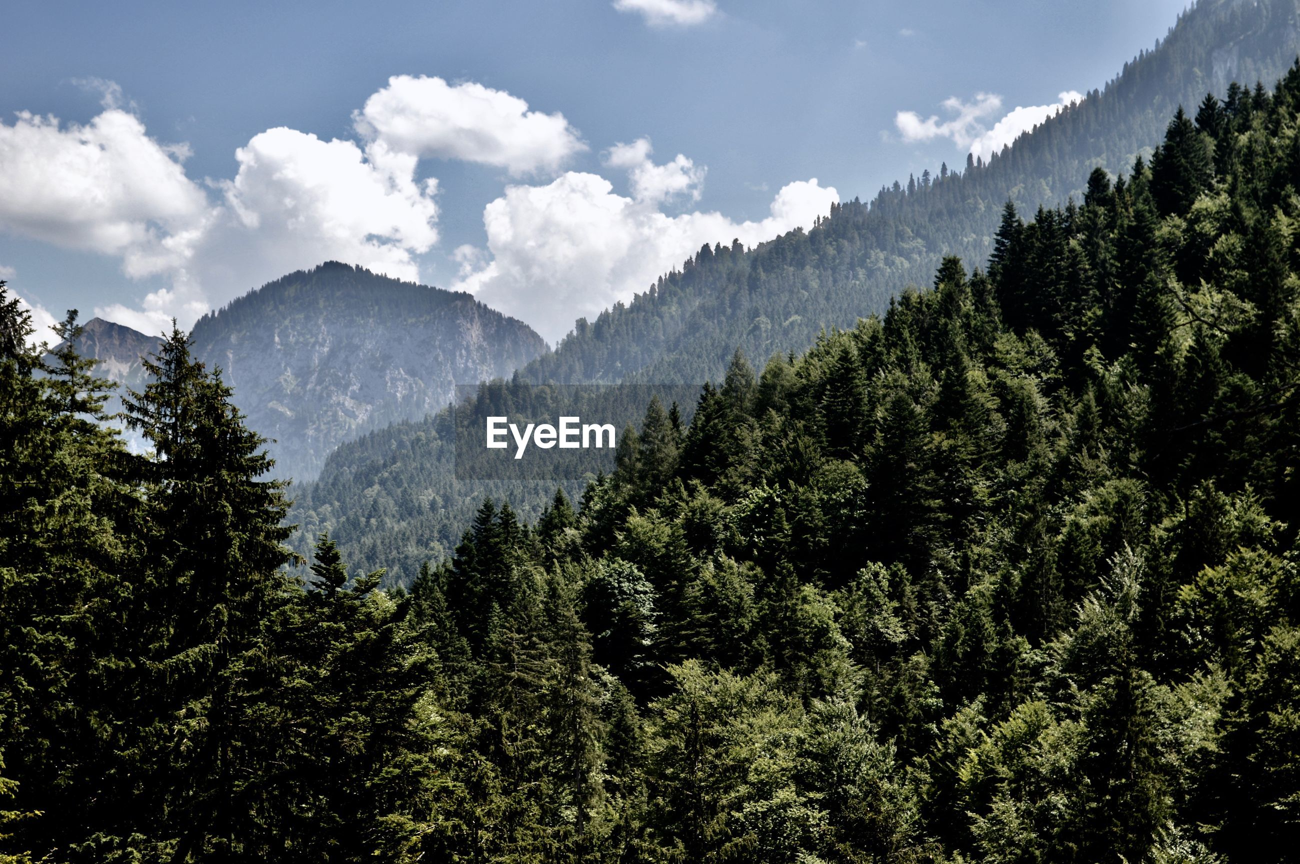 SCENIC VIEW OF MOUNTAINS AND TREES