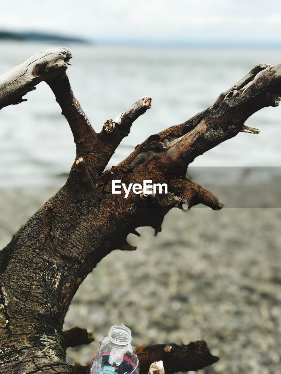 Close-Up Of Rusty Tree Trunk Against Sea