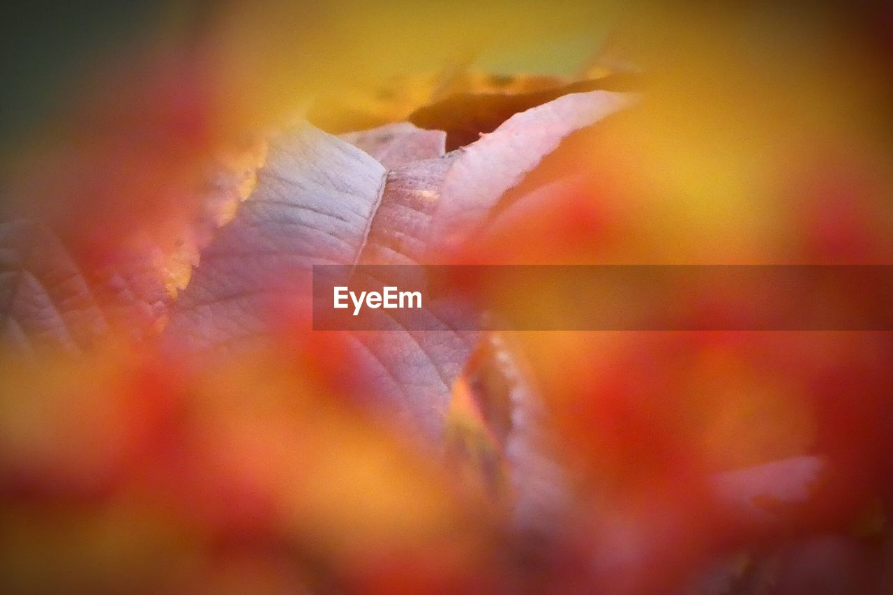 selective focus, nature, leaf, beauty in nature, autumn, no people, growth, outdoors, close-up, plant, fragility, day