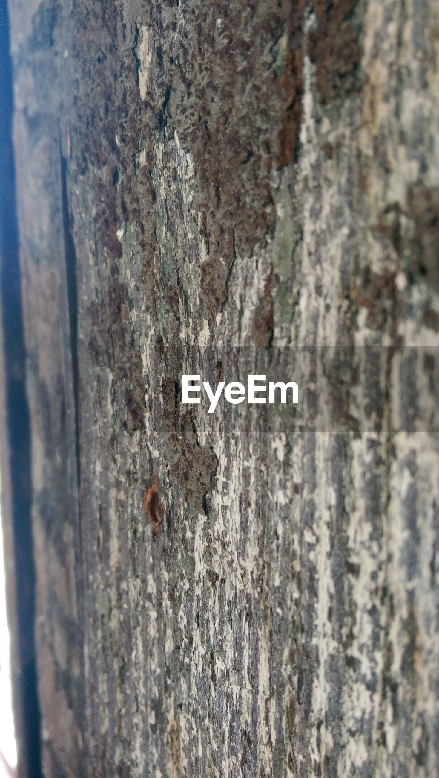tree trunk, animals in the wild, textured, animal themes, wildlife, insect, one animal, close-up, wood - material, rough, nature, focus on foreground, outdoors, bark, selective focus, tree, day, no people, weathered, beauty in nature
